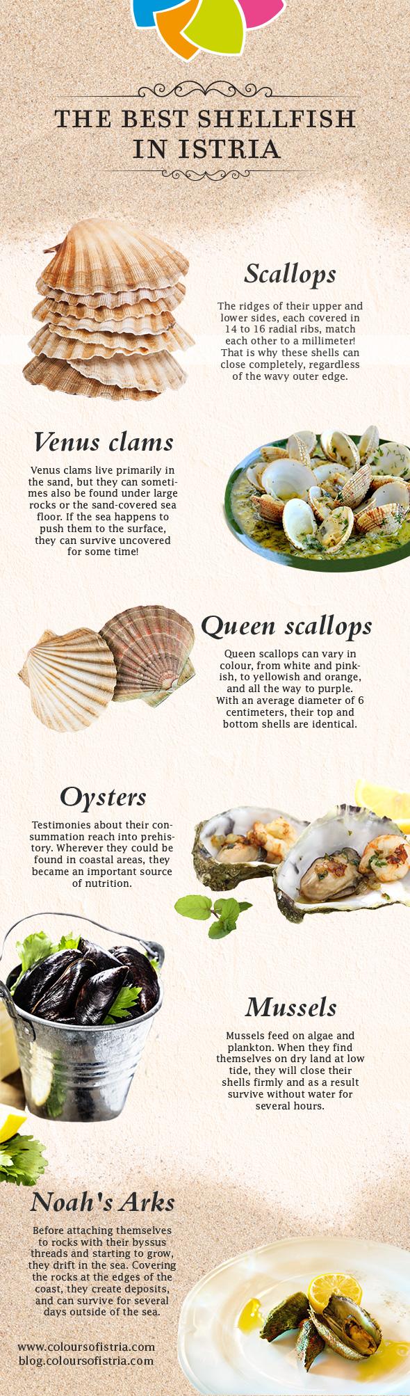 istria-seashells-infographics