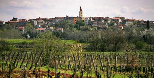 Brtonigla vinogradi