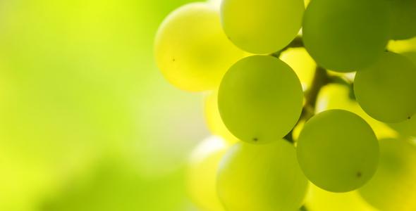 Degrassi vino