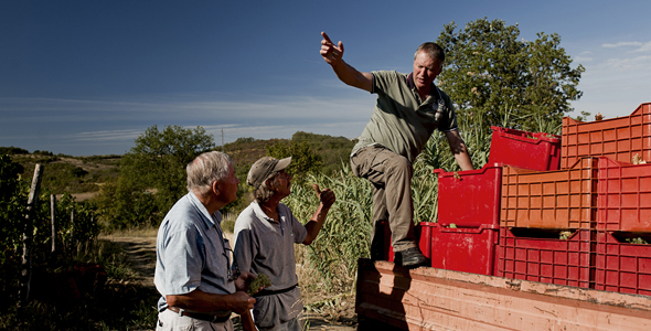 Degrassi vinogradi