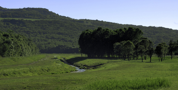 Mirna_River_Valley_Istria_Forrest