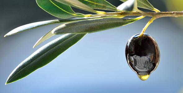 Olive_Oil_Istria