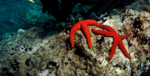 Diving_Northwestern_Istria_Stars