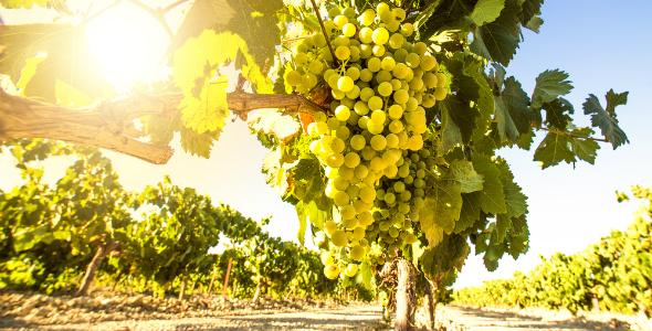 NW-Istria-gourmet-wine