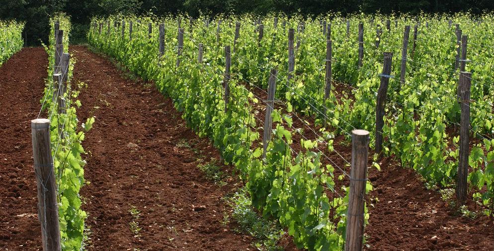 gourmet_wine