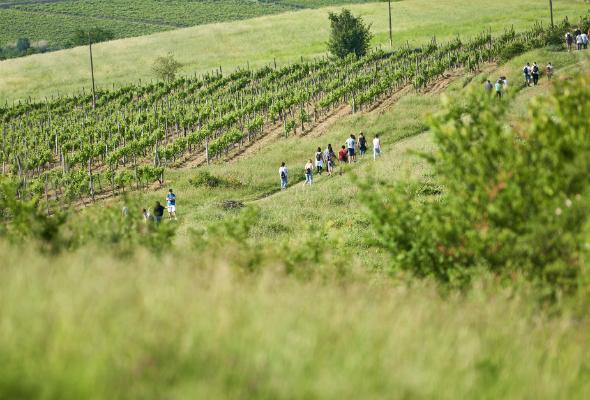 wineandwalk