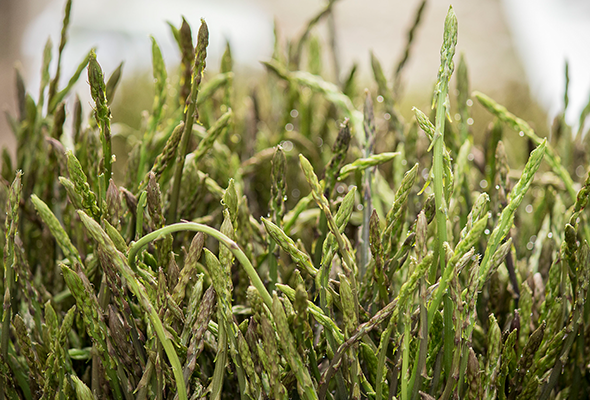 asparagus-gourmet-coi